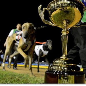 Melbourne Cup greyhounds