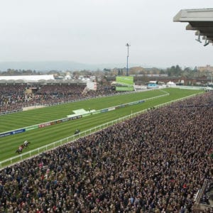 Cheltenham horse racing news