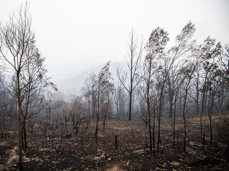 ATC Bushfire Donations