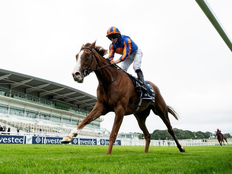 St leger betting trends race to dubai golf betting systems
