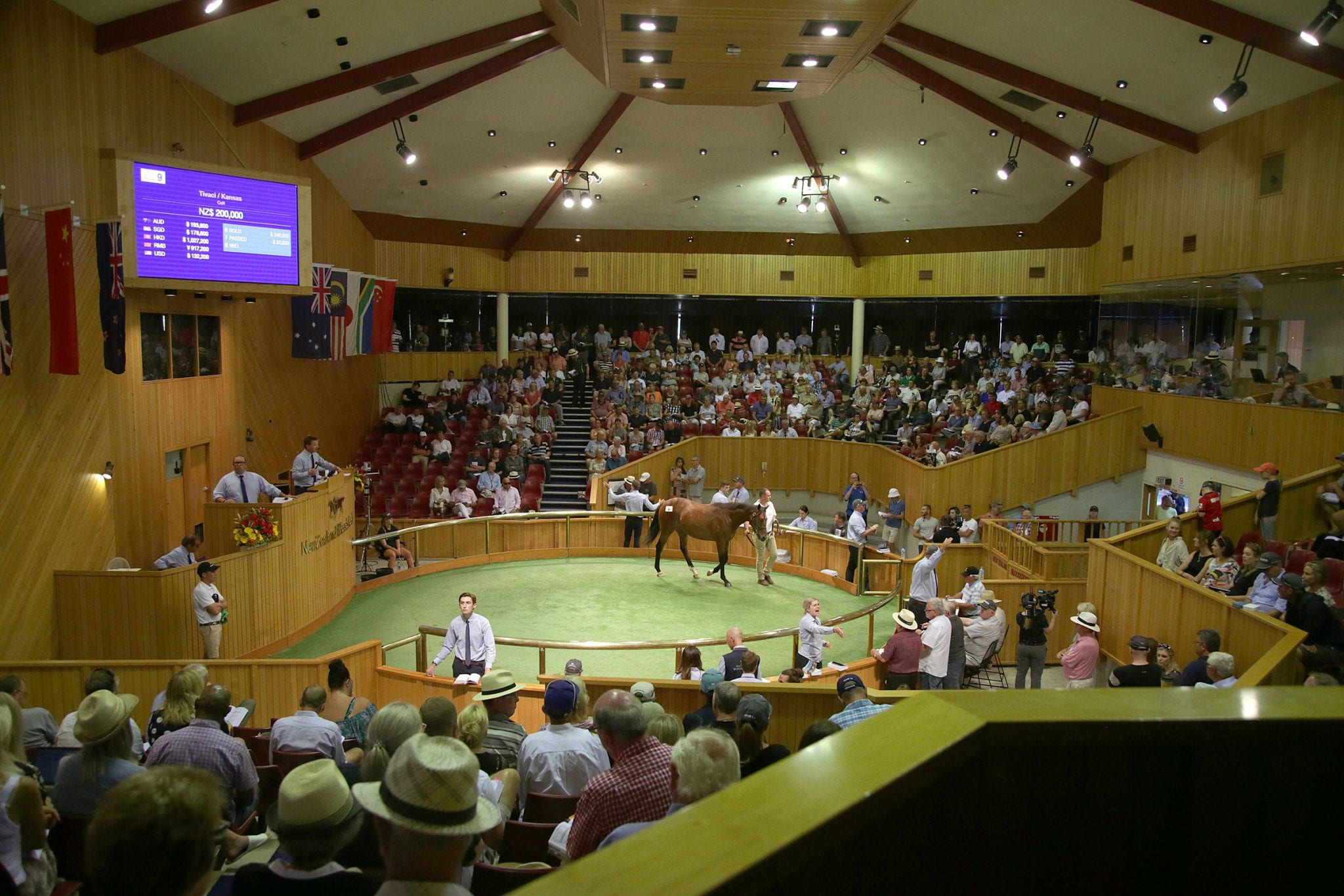 New Zealand Bloodstock's National Yearling Sales Series